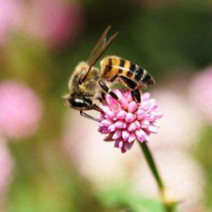 BEES sat 026